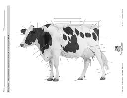 livestock anatomy package powerpoints u0026 worksheets one less thing
