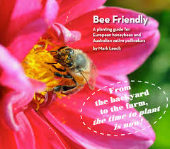 australian native plants list bee friendly a planting guide for european honeybees and