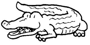 Dessins de crocodile à colorier