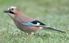uk native plants 19 common british birds in your garden love the garden