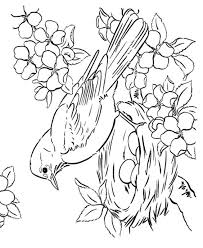 bird coloring page bird coloring pages for adults page of a bird in spring with