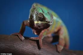 Seeking Lizard Review Reptiles Should Not Be Kept As Pets Expert Warns Daily Mail