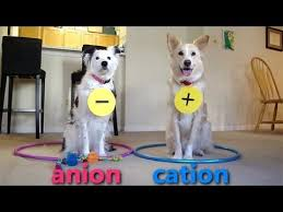 Chemistry Dog Meme - dogs teaching chemistry chemical bonds youtube