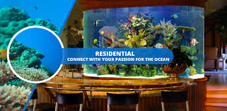 aquarium design boston custom aquariums weston design aquarium