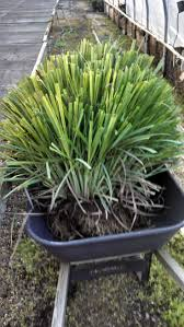 95 best garden herb images on pinterest herbal medicine