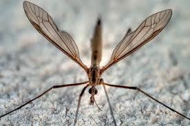 moustique dans ma chambre putain y un cousin dans ma chambre sur le forum blabla 15 18 ans