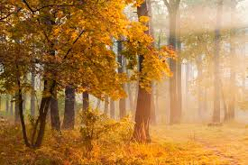 collection autumn poems classic