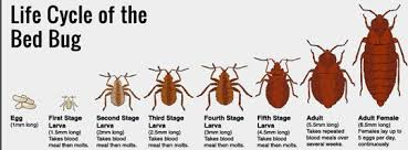 Dont Let The Bed Bugs Bite Don U0027t Let The Bedbugs Bite In Your Whistler Vacation Rentals
