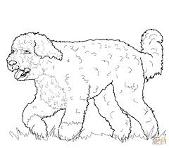 two chow chow dogs coloring page free printable coloring pages