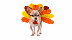 thanksgiving pet tips petswelcome