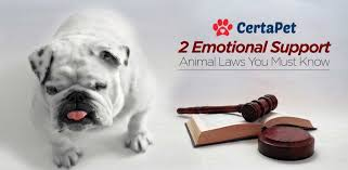 Comfort Dogs Certification 2 Ironclad Emotional Support Animal Laws Must Read