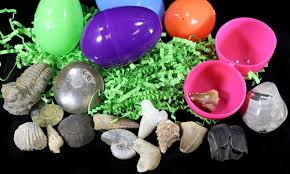 filled easter eggs fossil filled easter eggs 12 pack for sale fossilera
