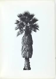 a few palm trees 1971 by edward ruscha the collection art