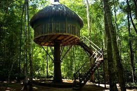 trees inhabitat green design innovation architecture stunning