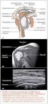Anatomy Of Rotator Cuff Managing Rotator Cuff Disorders Arthritis Research Uk