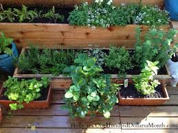 garden apartment in harlem new york one hundred dollars a month