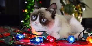 grumpy cat wrapping paper grumpy cat proves it s to be a cat at christmas huffpost