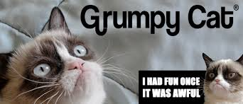 Grumpy Cat Meme I Had Fun Once - cat