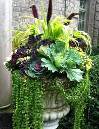 fabulous urn filled with autumn creeping ornamental