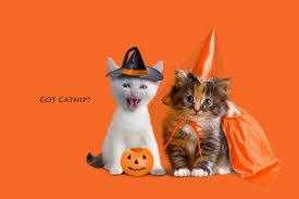 halloween backgrounds for pictures halloween kitten