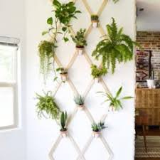 Wall Hanging Planters by How To Care For The Lovely Air Plants That Adorn Your Home