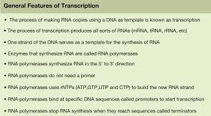 5 3 transcription biology libretexts