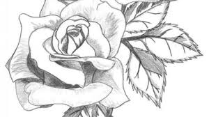 pencil drawing rose flower pencil sketch of garden stock
