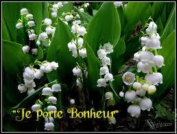Imgp3964 muguet porte bonheur blanc Fleur Nature  Convallaria Majalis