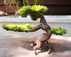 grow moss on tree 243180
