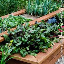 Raised Gardens For Beginners - vegetable gardening and composting from beginning to master