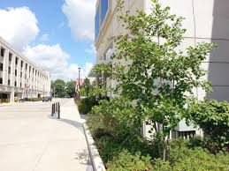 commercial services king tree specialists
