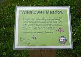 native plants for birds wildflower meadow tankerhoosen valley gardens