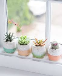 modern wife life 43 ways to decorate with succulents u0026 where to