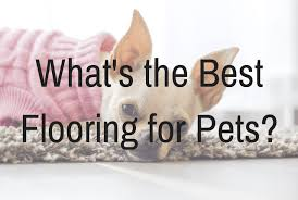 Best Flooring For Pets Tile Or Flooring For Pets American Chem