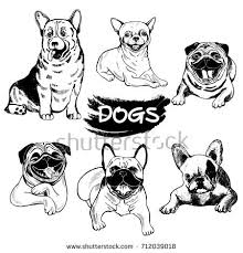 dog breeds stock images royalty free images u0026 vectors shutterstock