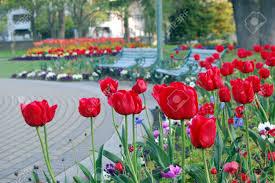 New Zealand Botanical Gardens Roses In Park Botanical Gardens Christchurch New Zealand Stock
