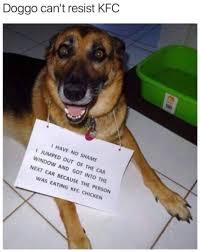 Kfc Memes - dog can t resist kfc meme by peebee memedroid