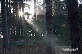 sherwood forest christmas 2016 img 10431 jpg