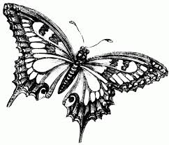best butterfly drawing drawing art library