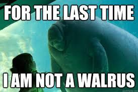 Walrus Meme - i am the walrus meme am best of the funny meme
