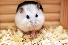 facts about small mammals as pets petfinder