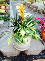 indoor plants and decorative potted plants