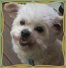 caring hearts rescue petfinder