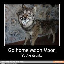 Moon Moon Meme - moon moon wolf funny moon moon has fucking rabies goddammit