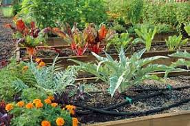 steps to creating great soil and a healthy garden growing a