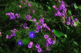 native plants michigan more from john u0027s butterfly and hummingbird garden in michigan