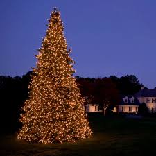 white outdoor lighted christmas trees contemporary white outdoor lighted christmas trees image home