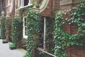 Urban Gardening New York Required Reading Sidewalk Gardens Of New York Gardenista