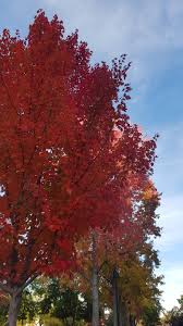 Why Fall Is The Best Season Why Autumn Is The Best Season A Fine Delicacy
