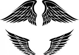 set of two wings designs vector free